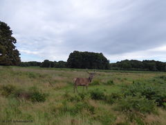 Richmond Park in Londen